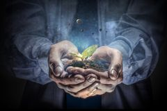 Birth of new life. Close of businessman holding green seedling in palms stock image