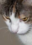 Close cat portrait - RAW format stock photos
