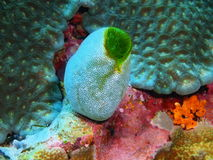 close coral indonesia soft sulawesi up Arkivfoto