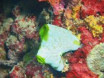 close coral indonesia soft sulawesi up Royaltyfria Bilder