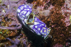 close coral indonesia soft sulawesi up στοκ εικόνες