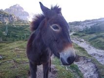 Close detail of a donkey face Royalty Free Stock Photography