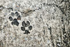Dog Footprint on Concrete Ground. stock images