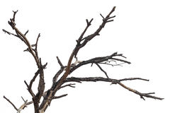 Close-dried dead branches. Stock Image