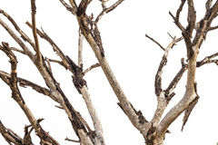 Close-dried dead branches. Royalty Free Stock Image