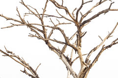 Close-dried dead branches. Royalty Free Stock Photography