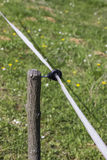 Close of electric fence wire Royalty Free Stock Photos