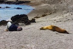 Close Encounter with a Galapagos Sea Lion stock images