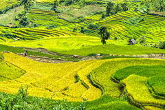 Close farmers in the fields harvesting rice terraces royalty free stock photo