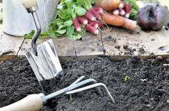 Gardening tools and vegetables in garden. Close on gardening tools on soil in front of organic vegetables Royalty Free Stock Photography