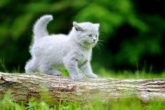 Close gray kitten on tree royalty free stock image
