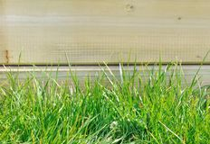 Greeny grass Royalty Free Stock Images