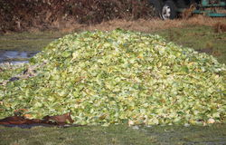 Close on Green Leafy Compost Royalty Free Stock Photography