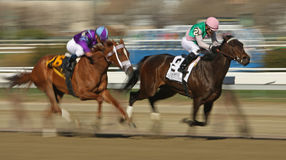 Close Hatches Wins The Gazelle Stakes Royalty Free Stock Photo