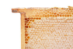Close honeycomb. In wooden frame Stock Photos