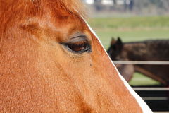 Close of Horse Profile Royalty Free Stock Photos
