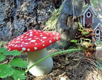 Fairy or Gnome Fantasy Garden Mushroom and Little Red House. This is a close image of a hand-painted ceramic toadstool mushroom, placed in a fairy garden setting Stock Image