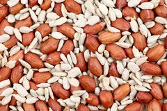 Close ip of peanuts and sunflower seeds. Stock Photos