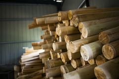 Wood log with sunshine. Close look of Wood log with sunshine in wood factory Royalty Free Stock Photo