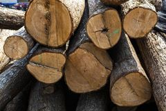 Wood log with sunshine. Close look of Wood log with sunshine in wood factory Stock Images
