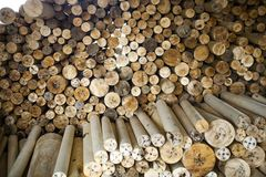 Wood log with sunshine. Close look of Wood log with sunshine in wood factory Royalty Free Stock Image