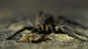 Close perspective of spider in containment being fed stock footage