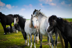 Close Photo of Black and White Horse Stock Image