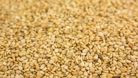 Close photo of Sesame seeds, background made of sesame seeds.  royalty free stock image