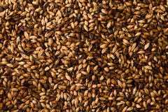 Close photo up of malt grains. Malt photographed close as pattern. a very expensive form of malt for darker beers Royalty Free Stock Images