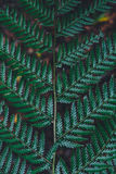 Close Photography of Green Fern Plant Stock Photos