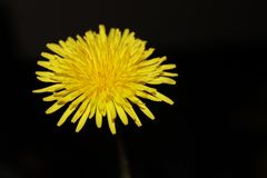 Close Photography of Yellow Aster Stock Photo