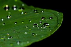Close Photograpy of Leaf With Water Drop Royalty Free Stock Photos