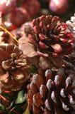 Close pine cones. 3 pine cones Royalty Free Stock Image
