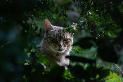 Close portrait of a cat through the vegetation in a rural setting stock images