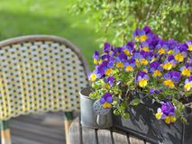 Viola in a flowerpot on a garden table with a little watering can. Close on purple viola in a flowerpot on a garden table with a little watering can stock photography