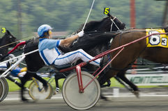 Close race call. Closeup of horses and drivers in race Royalty Free Stock Images