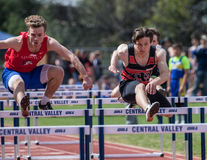 Close Race in The High Hurdles Stock Photo