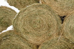 Close on Round Hay Bale in Winter. Close on a bale of hay used for feeding livestock royalty free stock photo