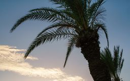 Palm tree in Mediterranean coast with colorful evening sky stock images