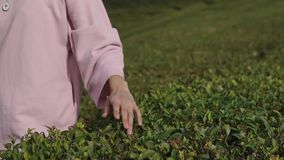Close shot of a woman`s hand who is driving her fingers over the green grass. Close shot of a woman`s hand, the lady is driving her fingers over the green grass stock video