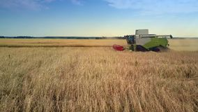 Close side view modern harvester gathers ripe rye in field. Beautiful close side view modern powerful harvester gathers ripe rye in large field against pictorial stock video