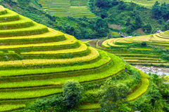 Close terraced fields paths down the hill Stock Images