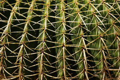 Close to the cactus Stock Photography