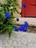 Close to a flower. Flowers on the doorstep Stock Photography