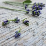 Close to a flower. Lavender on the table Stock Photos
