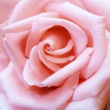 Close to a flower. Close to a Rose Royalty Free Stock Images
