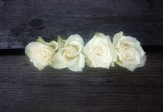 Close to a flower. White Roses In A Row Royalty Free Stock Photo