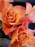 Close to flowers. Roses in orange Stock Photos