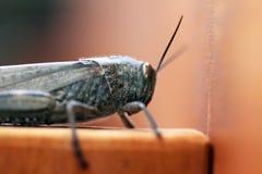 Close to the grasshopper
