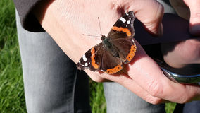 Close to nature, butterfly on hand, springtime. Spring butterfly on hand, nature photography on a smartphone Royalty Free Stock Image